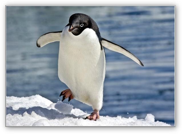 Penguin Body Pillow | Penguins, Body